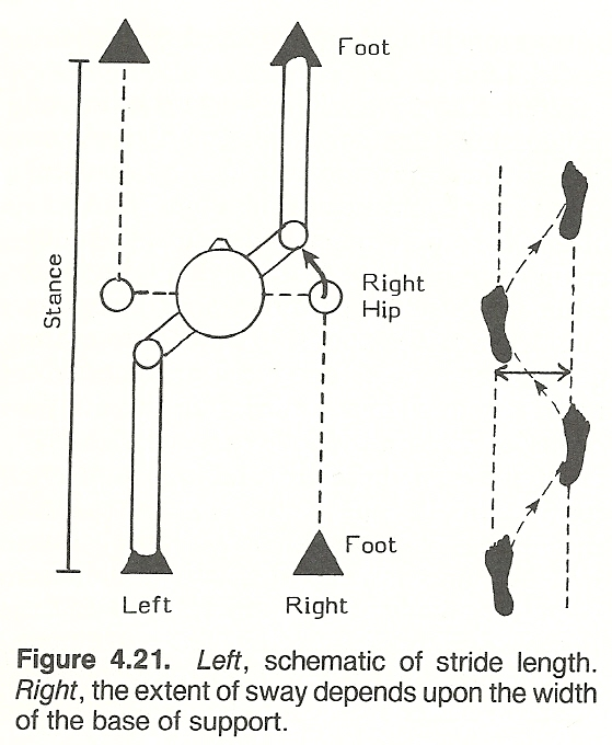 relationship between hip extension range of motion and postural alignment