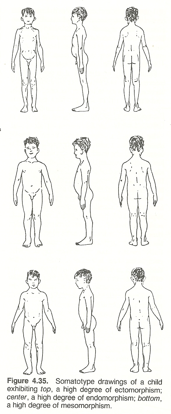 chapter body alignment posture and gait