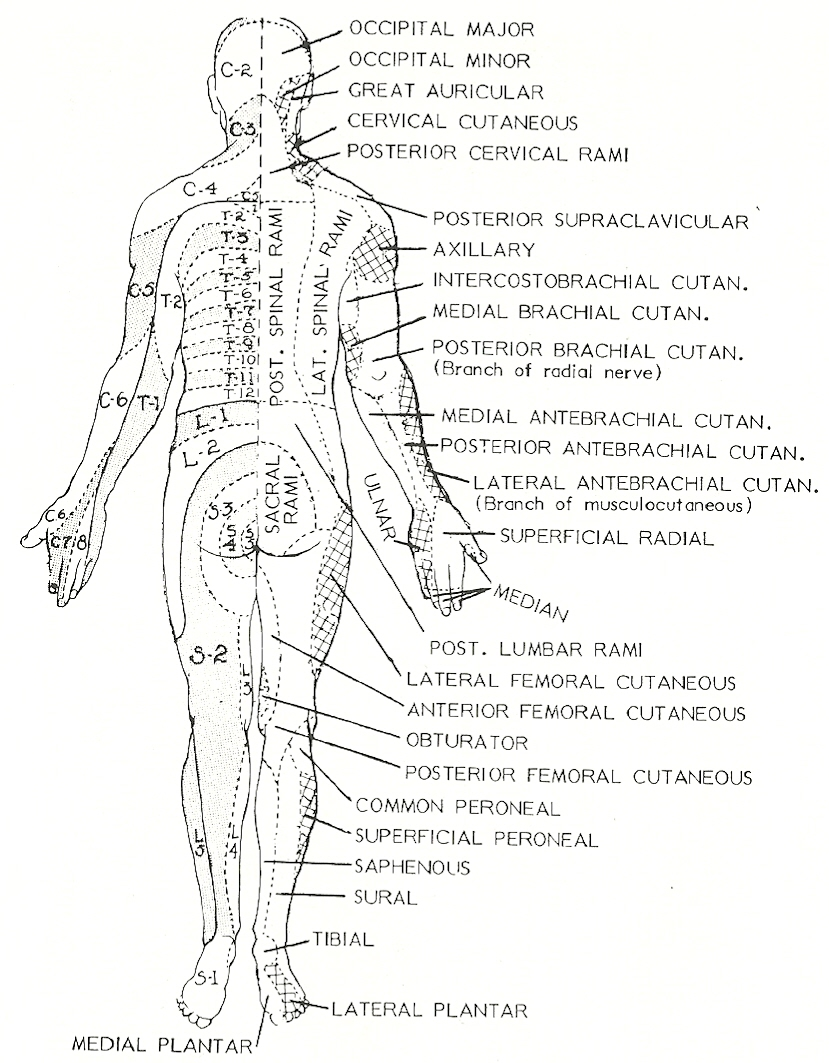 Chapter 9 Clinical Disorders And The Motor System