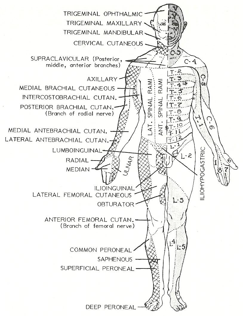 Chapter 59 Chronic Neurologic Problems Flashcards Quizlet