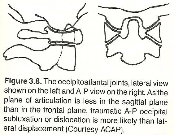 Chapter 3 The Cervical Spine