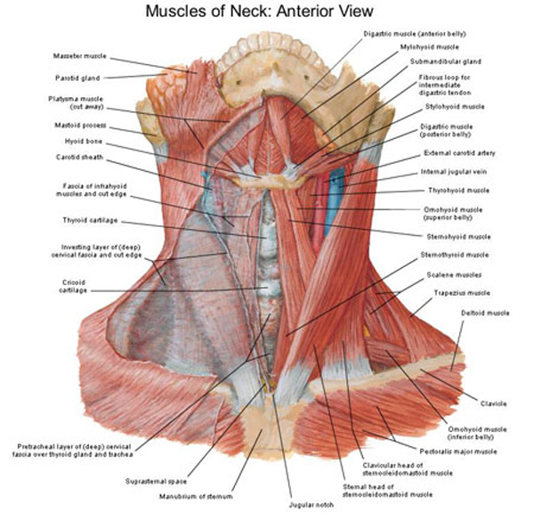 Chapter 8 Physical Examination Of The Neck And Cervical Spine