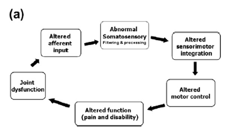 The Role of Spinal Manipulation in Addressing Disordered Sensorimotor Integration and Altered Motor Control