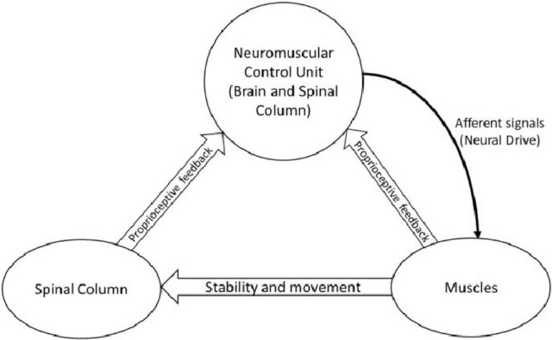 Stability: From Biomechanical Concept to Chiropractic Practice