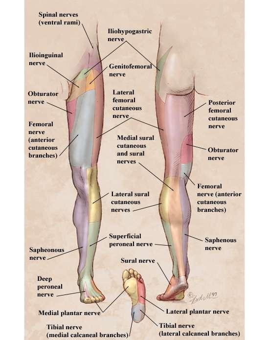 Paresthesias: A Practical Diagnostic Approach - December, 1997