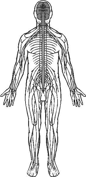nervous system  49k